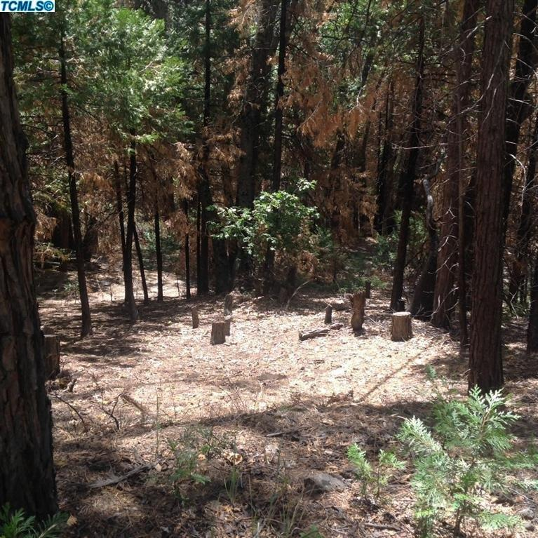 Cedar Slope, Springville, CA 93265, Sequoia Natl Park, California 93265